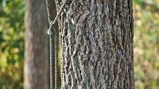 Free Roped Tree Stock Photography - 85990552