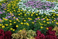 Free Flower Beauty Stock Photos - 863253