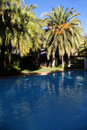 Free The Palm Pool Stock Photography - 869622