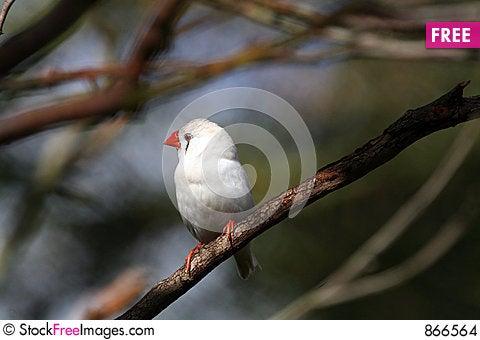 Free White Bird With Red Beak Stock Images - 866564