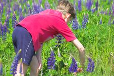 Boy Gathering Flowers Royalty Free Stock Images