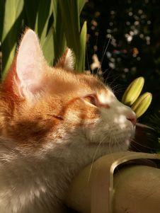Free Cat Stock Photo - 860570