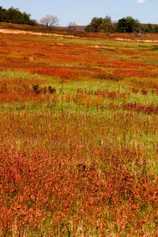 Free Big Meadow Stock Photos - 860633
