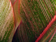 Free Tropical Leaf Close-up 2 Royalty Free Stock Photography - 861377