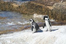 Free 2 Penguins Royalty Free Stock Photos - 861448