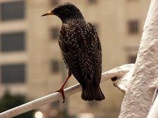 Free Bird Stock Images - 862274
