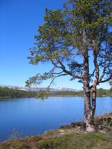 Free Pine By Lake Royalty Free Stock Photos - 862968