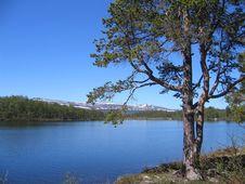 Free Pine By Lake Stock Image - 862971