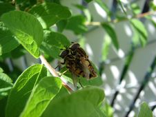 Free Insect Love Royalty Free Stock Photo - 864165