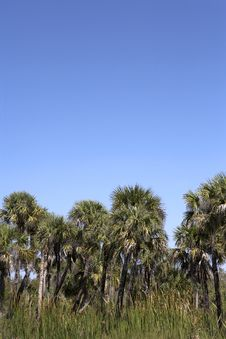 Free Palm Tree Line View Royalty Free Stock Photo - 864425