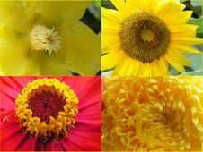 Free Yellow Flowers Stock Photos - 864603