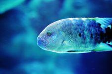 Free Fish Royalty Free Stock Photo - 865595