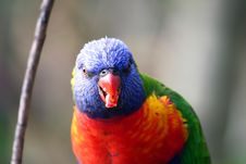 Free Face Of Colorful Bird Stock Images - 866314