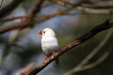 Free White Bird With Red Beak Stock Images - 866564