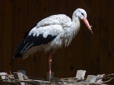 Free Stork Stock Photo - 866740