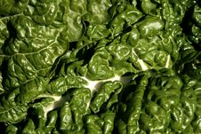 Free Chard Leaf Stock Image - 867131