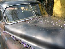 Free 1950 S Chev With Jacaranda Petals 6 Stock Photography - 867132
