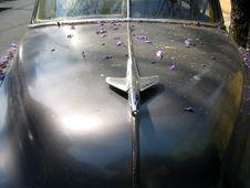 Free 1950 S Chev With Jacaranda Petals 2 Royalty Free Stock Image - 867136