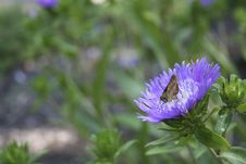 Free Moth On Flower Royalty Free Stock Photos - 867188
