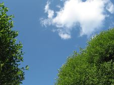 Free Trees And Cloud Stock Images - 867344