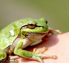 Free Froggy Stock Image - 867701