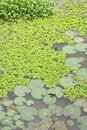 Free Lotus Pond Stock Photography - 8600772