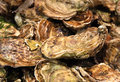Free Oysters In Shells Royalty Free Stock Image - 8604946