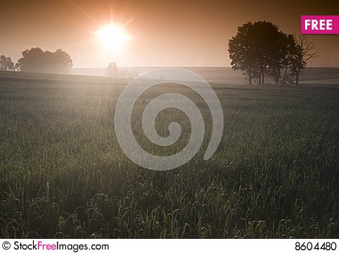 Free Foggy Sunrise Stock Photo - 8604480