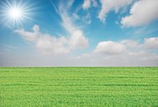 Free Grass And Sun Royalty Free Stock Images - 8600639