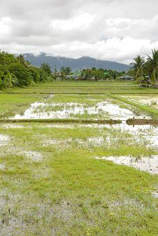 Free Rice Paddy Stock Photos - 8600733