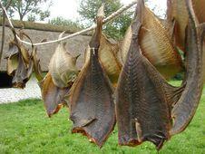 Free Drying Fish Stock Image - 8601081