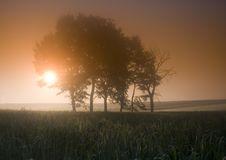 Free Foggy Sunrise Stock Photo - 8601330