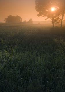 Free Foggy Sunrise Stock Photos - 8601343