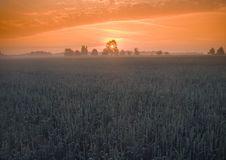 Free Foggy Sunrise Royalty Free Stock Photo - 8601635