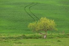 Free Lonely Tree Royalty Free Stock Photography - 8601937
