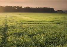 Free Foggy Sunrise Royalty Free Stock Image - 8602256