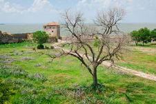 Dry Tree On Green Grass