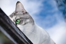 Free Cat S Eye Royalty Free Stock Photos - 8602278