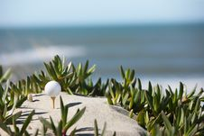 Free Golf Ball Stock Photography - 8602372