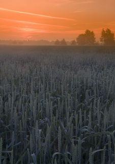 Free Foggy Sunrise Stock Photo - 8602650