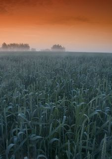 Free Foggy Sunrise Royalty Free Stock Photo - 8602725