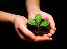 Free Plant In Hands Stock Photography - 8602732