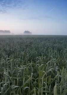 Free Foggy Sunrise Royalty Free Stock Photography - 8602747