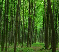 Free Forest Stock Images - 8602774
