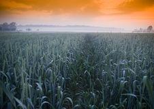 Free Foggy Sunrise Royalty Free Stock Photos - 8602778