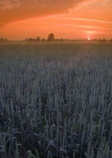 Free Foggy Sunrise Stock Image - 8602791