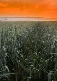 Free Foggy Sunrise Royalty Free Stock Photo - 8602835