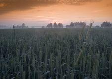 Free Foggy Sunrise Stock Photo - 8602870
