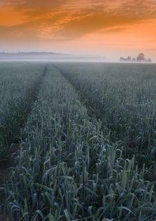Free Foggy Sunrise Royalty Free Stock Photo - 8602925