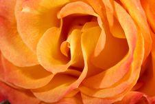 Free Rose Stock Image - 8603361